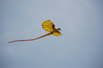 Kite in Sanur