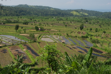 Bali's rice fields