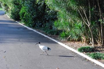 Aussie bird