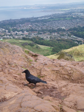 The crow at the top