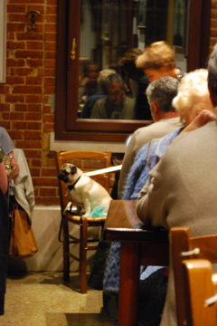 Dog at a restaurant in Venice