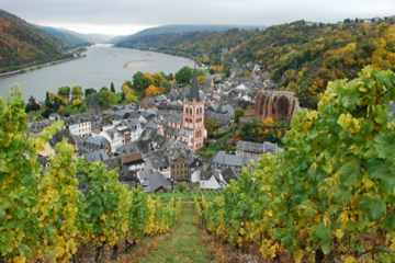 Bacharach viewed from the vineyards
